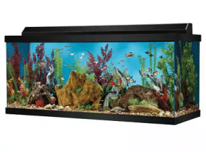 75 gallon aquarium fish tank