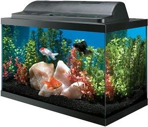 10 gallon acrylic aquarium