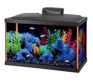 best 10 gallon aquarium