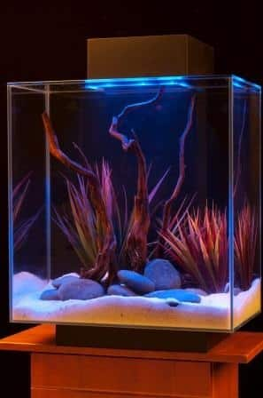 10 gallon aquarium starter kit