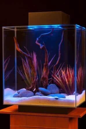 10 gallon aquarium starter kit