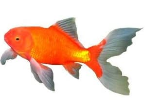 Starting a fish tank for beginners a guide to your first for Starting a fish tank for beginners