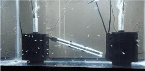 aquarium filtration
