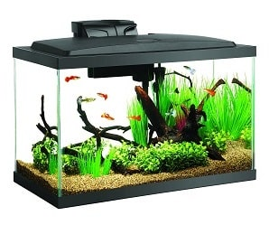 betta fish tank setup