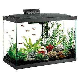 20 gallon fish tank starter kit