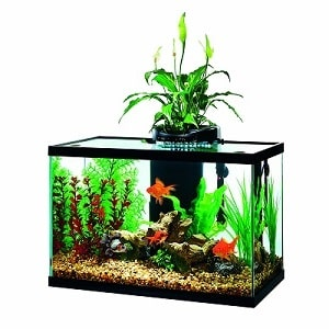 20 gallon aquarium starter ki