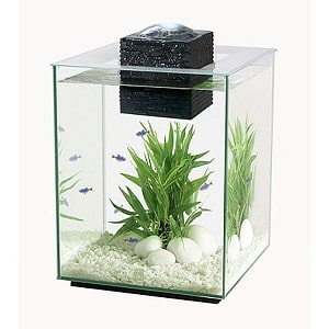 5 gallon glass fish tank