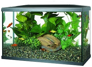 best 10 gallon aquarium tank