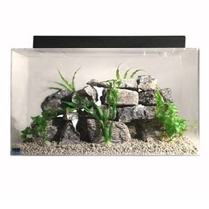 20 gallon fish tank setup