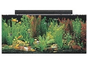 best 40 gallon aquarium