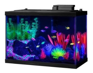 best 20 gallon tank