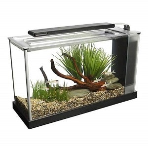 best 5 gallon fish tank