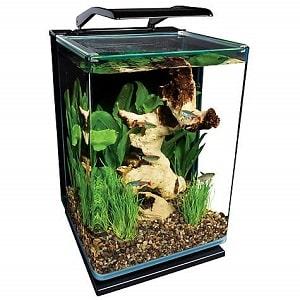 best 5 gallon aquarium