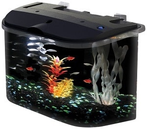 5 gallon fish tank starter kit