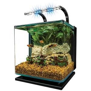 best betta aquariums