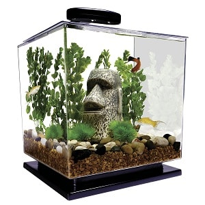 8 Of The Best Betta Fish Tanks 2018 Review Detailed Buyers Guide