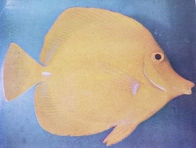 most colorful marine aquarium fish