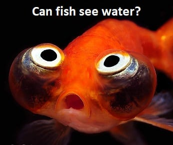 what can fish see