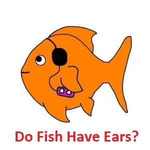 Do fish have ears