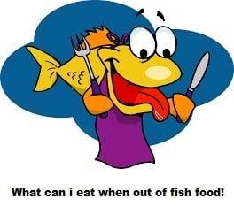 fish eating homemade food