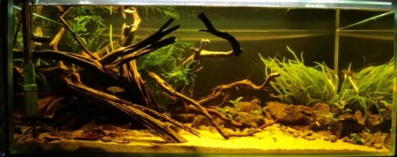 planted blackwater aquarium